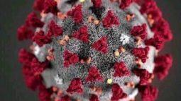 ২৪ ঘণ্টায় চিহ্নিত ৬৭৮০ প্রাণ গেছে ১৯৫ মৃত্যু ছাড়াল ১৯ হাজার শনাক্ত সাড়ে ১১ লাখ